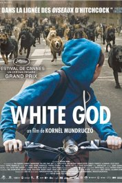 background picture for movie White God