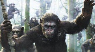 Affiche du film : La planète des singes : l'affrontement
