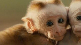 Affiche du film : Au royaume des singes
