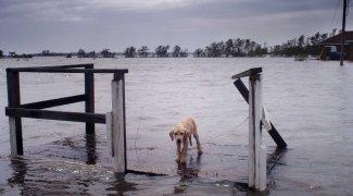 Affiche du film : Ouragan