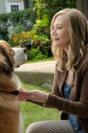 background picture for movie Mes vies de chien