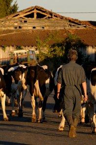 Affiche du film : Petit paysan