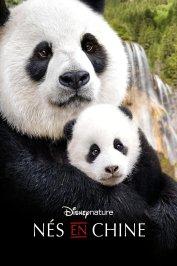 background picture for movie Nés en Chine