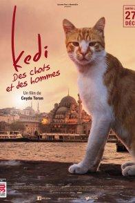 Affiche du film : Kedi : des chats et des hommes