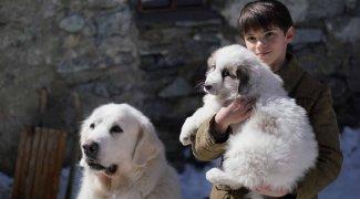 Affiche du film : Belle et Sébastien 3 : le dernier chapitre