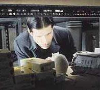 Affiche du film : Willard