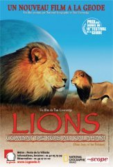 background picture for movie Lions : combat de rois au kalahari