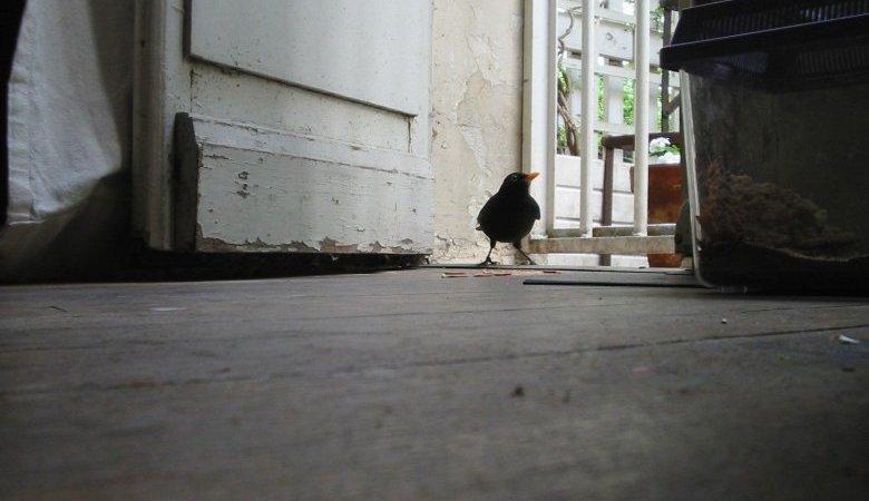 Photo du film : Le filmeur