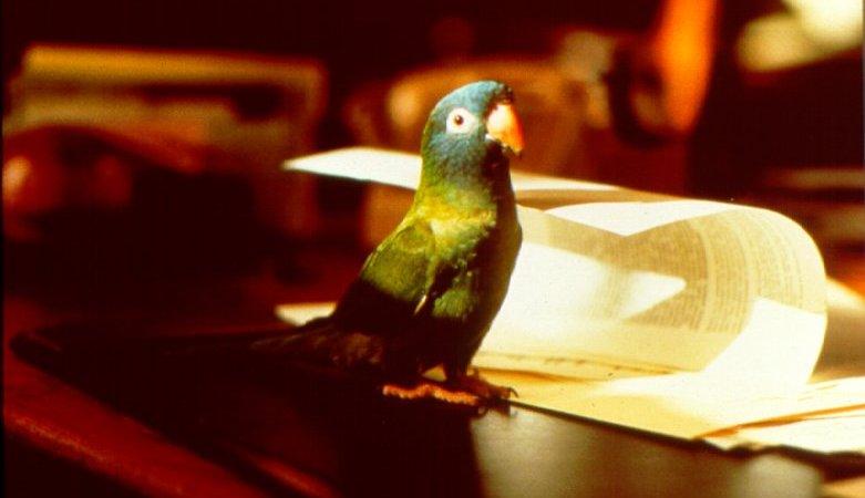 film paulie le perroquet qui parlait trop