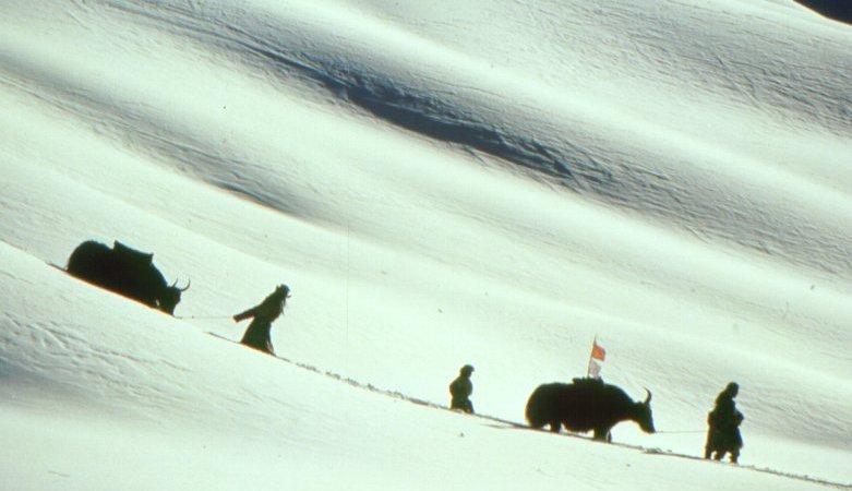 Photo du film : Himalaya (l'enfance d'un chef)