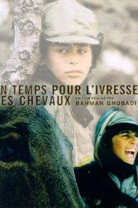 Affiche du film : Un temps pour l'ivresse des chevaux