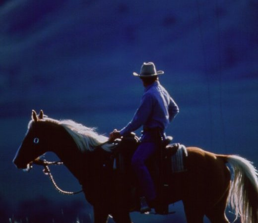 Photo du film : L'homme qui murmurait à l'oreille des chevaux