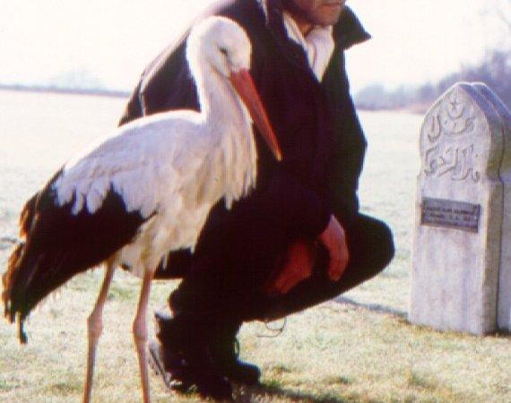 Photo du film : Je suis né d'une cigogne