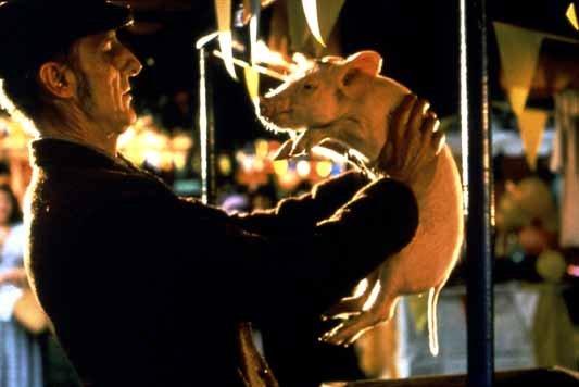 Photo du film : Babe, Le Cochon Devenu Berger
