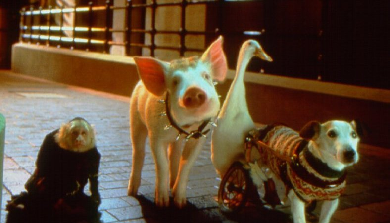 Photo du film : Babe (le cochon dans la ville)
