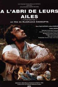 Affiche du film : A l'abri de leurs ailes