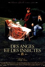 background picture for movie Des anges et des insectes
