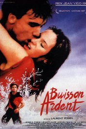 background picture for movie Buisson ardent