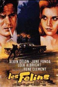Affiche du film : Les félins
