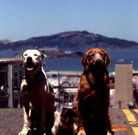 Photo du film : L'incroyable voyage à San Francisco