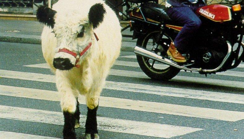Photo du film : La vache et le président