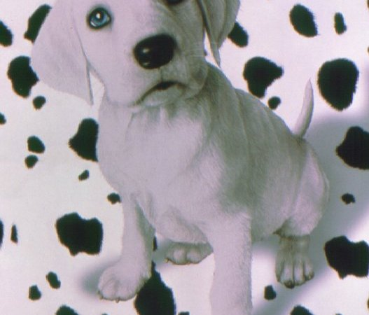 Photo du film : 102 dalmatiens