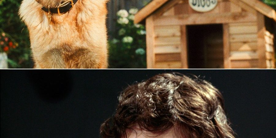 Photo du film : Comme chiens et chats - La Revanche de Kitty Galore
