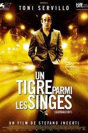 background picture for movie Un Tigre parmi les singes