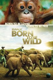 background picture for movie Born to be wild (3D)
