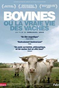 Affiche du film : Bovines