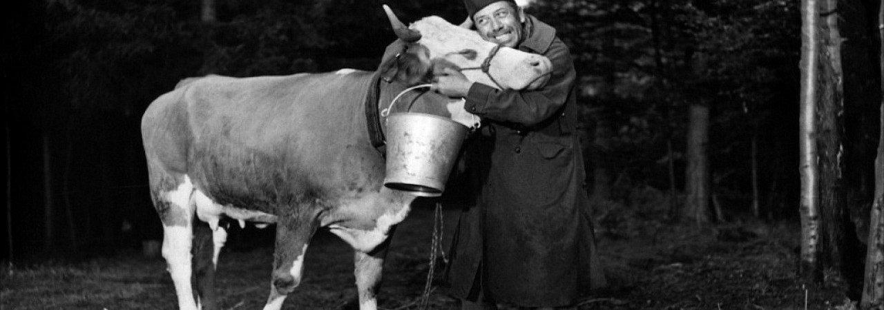 Photo du film : La vache et le prisonnier