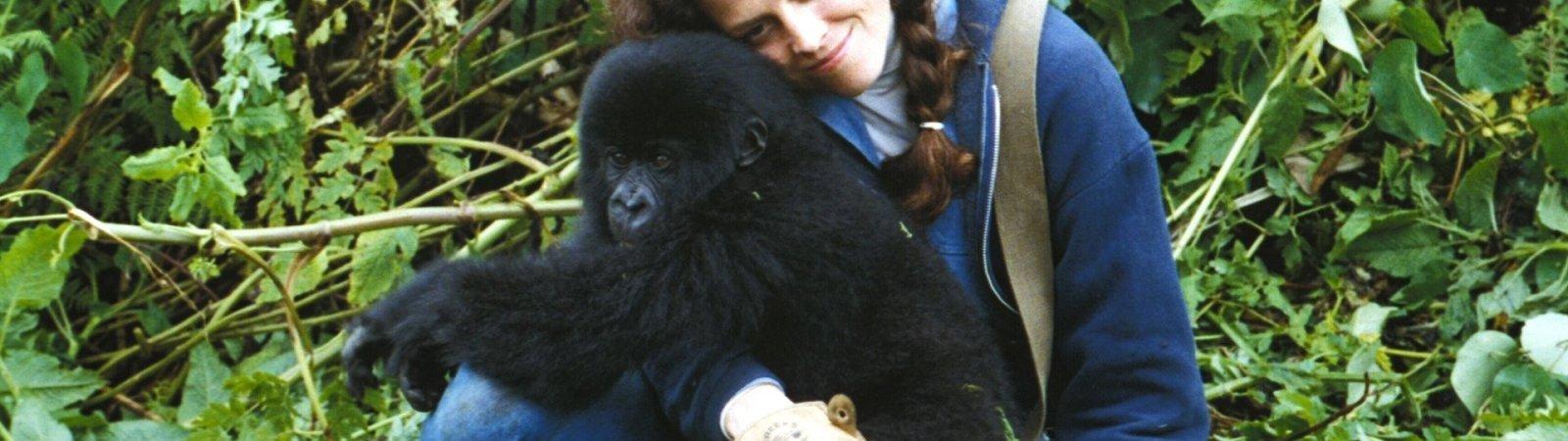 Photo du film : Gorilles dans la brume