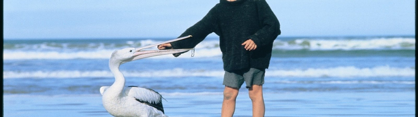 Photo du film : Storm boy