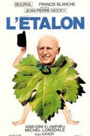 background picture for movie L'étalon