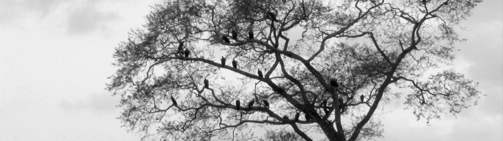 Photo dernier film Joao Viana
