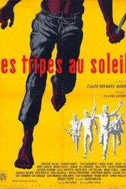 background picture for movie Les tripes au soleil