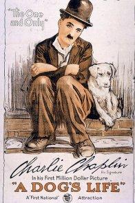 Affiche du film : Une vie de chien