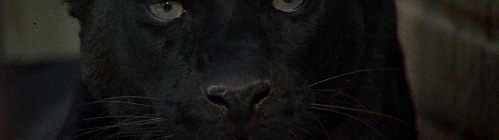 Photo du film : La feline
