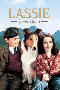 Affiche du film : Fidele lassie