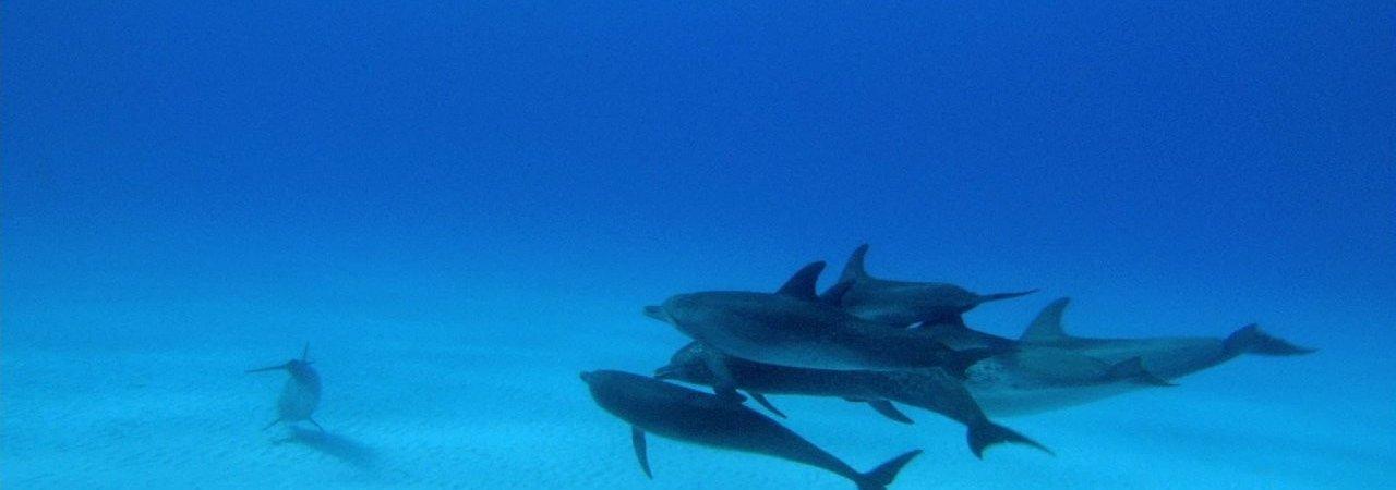 Photo du film : Dauphins et Baleines 3D, nomades des Mers