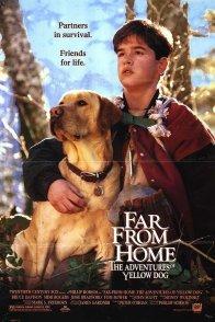 Affiche du film : Loin de la maison