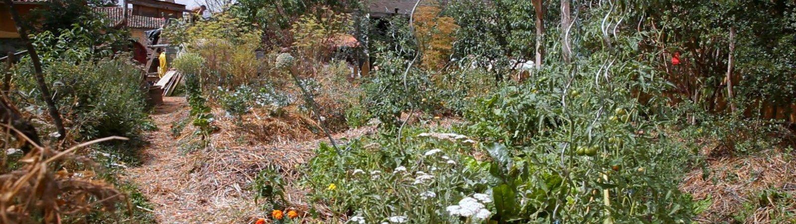 Photo du film : L'éveil de la permaculture