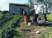background picture for movie Il dono