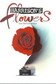 Affiche du film : Les fleurs d'harrison
