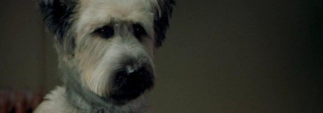 Photo du film : Karate dog