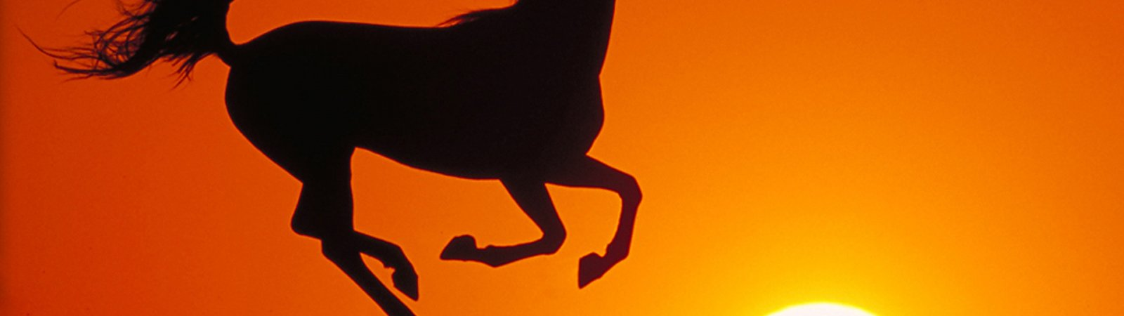 Photo du film : La légende de l'étalon noir